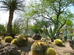 7 beautiful drought friendly lawn alternatives cactus garden