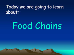 food chains full lesson with worksheets plan and food web