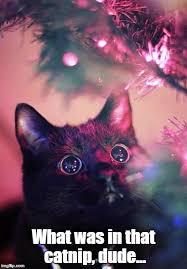 Christmas Cat Memes - christmas cat meme generator imgflip
