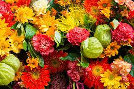 images gerberas mums flowers carnations