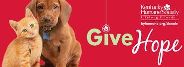 black friday pet adoption louisvilleky u0027s pet adoption agencies make it easy this weekend to