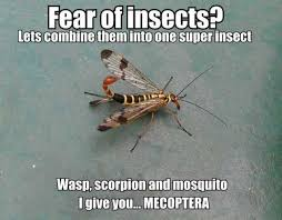 Mosquito Meme - dopl3r com memes fear of insects lets combine them into one