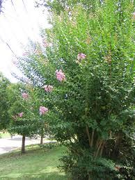 australian native garden plants wildlife flora