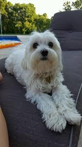 Real Deals Home Decor Franchise Pet Supplies Plus Pet Store 8029 Athens Ga