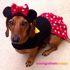 Disney Halloween Costumes Dogs 16 Pet Costumes Images Animals Pet Costumes