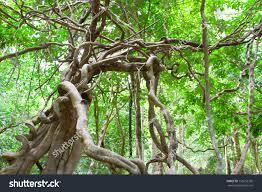 tropical rainforest thinglink