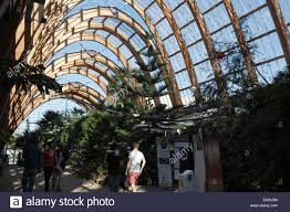 tropical plants in the winter gardens sheffield stock photo