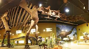 the world u0027s best photos dinosaurs full size displays inside the world of dinosaurs