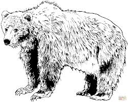 brown bear coloring pages brown bears coloring pages free coloring