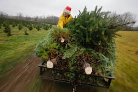 christmas tree farms in ohio cutting down christmas trees at