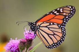 mdc invites families to pollinator program feb 25 at gustin golf