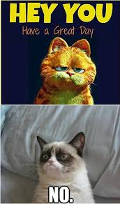 174 best funny grumpy cat images on pinterest funny things
