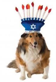cat menorah rubies menorah pet costume dog cat hanukkah passover menorah hat
