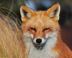 Delaware travel fox images 63 best delaware outdoor recreation images outdoor jpg