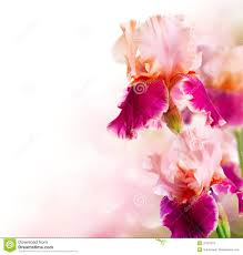 Beautiful Flower Pictures Beautiful Flowers Stock Photos Images U0026 Pictures 821 821 Images