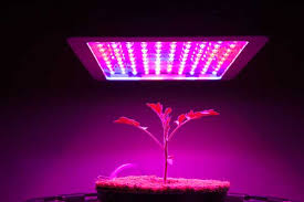 t5 vs led grow lights what are the best t5 grow lights for indoor growing green and vibrant