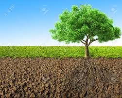 tree with roots 3d rendering stock photo picture and royalty free