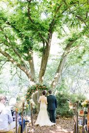 Pin Cushion Tree Pincushion Protea Wedding Feast By Charl Van Der Merwe