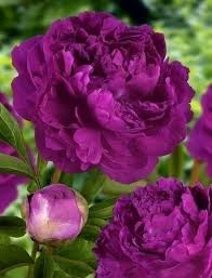 Colors Of Purple 50 Best Backyard Beauties Images On Pinterest Nature Plants And