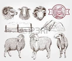 678 sheep grazing stock illustrations cliparts and royalty free