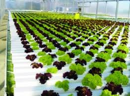 hydroponic gardening as an exciting hobby plant nutrients