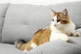 odeur de pipi de sur canapé comment retirer les traces et les odeurs d urine de sur un