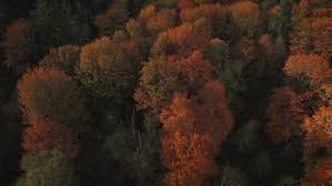 aerial fall season aerial colorful autumn trees