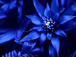 Garden Plants Names And Pictures by Types Of Blue Flower Names Pictures Blue Flowers For Wedding