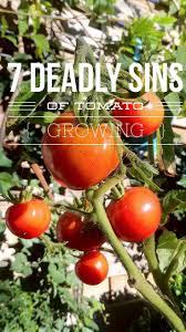 721 best veg tomatillo tomato images on pinterest growing