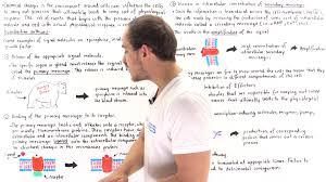 signal transduction pathways youtube