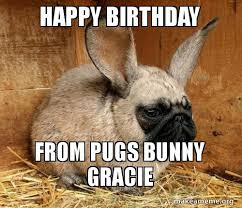 Happy Birthday Pug Meme - happy birthday from pugs bunny gracie make a meme