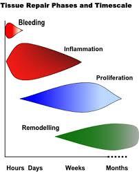 Tissue Renewal Regeneration And Repair Soft Tissue Repair And Healing Review
