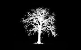 white tree solitude cyber nations wiki fandom powered by wikia