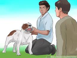 How to Be e a Dog Show Handler 13 Steps with