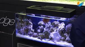 fluval edge marine light fluval edge marine evo spec interzoo 2016 meerwasser live tv