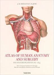 Netter Atlas Of Human Anatomy Online Atlas Of Human Anatomy And Surgery Pdf At Best Anatomy Learn