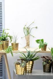 193 best terrarium images on pinterest plants gardening and cactus