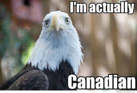 Funny Bird Memes - hilarious bird funniest memes daily funny memes