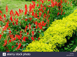 beautiful flowers in garden india stock photo royalty free
