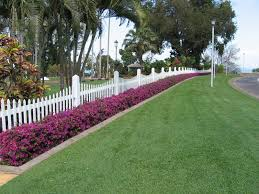 a low bougainvillea hedge in the caribbean though this may be the