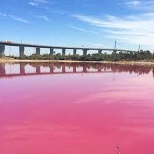 Pink Lake Pink Salt Water Lake At Port Melbourne