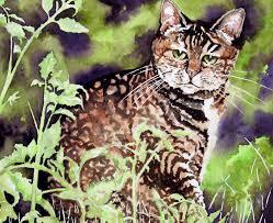 cat leslie white