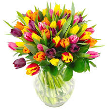 tulip bouquets mixed tulips fresh flower bouquet colourful tulips delivered
