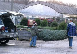 choose and cut christmas trees at jones family farm market in