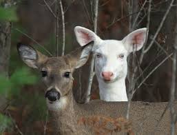 Wisconsin wild animals images 205 best deer images wild animals baby animals and jpg