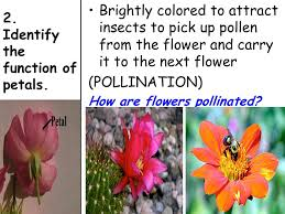 Identify Flowers - topic reproduction aim describe the structure of a flower and