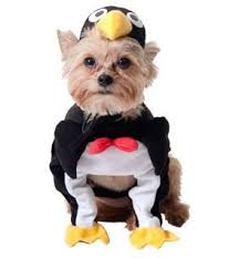 Cheap Dog Costumes Halloween Small Dog Halloween Costumes Amazon Penguin Dog Halloween