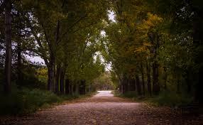 Gray Green Gray Asphalt Roadway Besides Green Leaf Tree Free Stock Photo