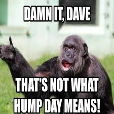 Funny Meme Pic - hump day meme funny 15 wednesday memes funny hump day memes with