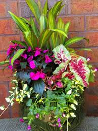 colorful shade container garden favorite places u0026 spaces garden